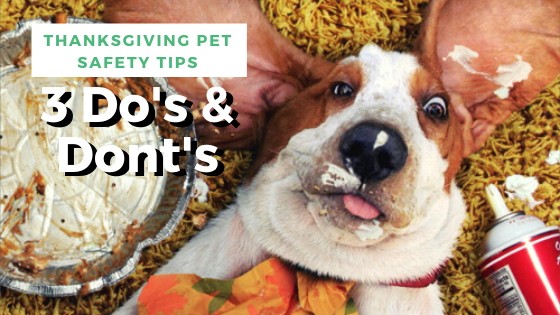 pet-safety-tips
